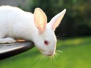兔子骨骼老化的原因有哪些