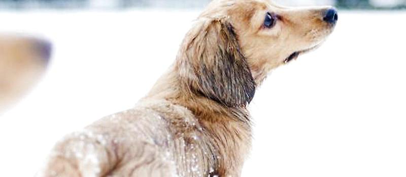 狗狗过冬注意事项|-波奇网百科大全