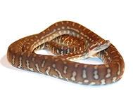 冬季养蛇注意事项