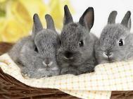 兔螨虫的预防处理