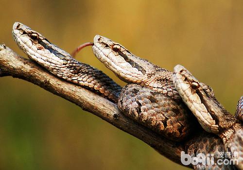 蛇冬眠醒后的几天注意观察其状态-冬季养蛇注意事项