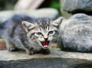 素食害死猫?