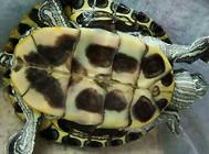 如何判定龟的异常情况?