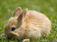 兔子引种注意事项