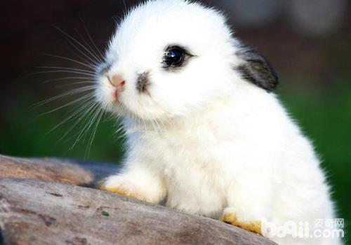 兔瘟免疫失败的原因有哪些