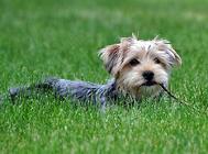 犬心丝虫预防药物的选择方法
