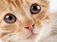 猫咪便血的原因及应对措施