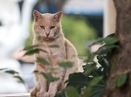 猫咪上呼吸道感染的病因及诊断