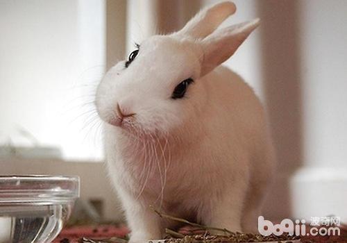 怎么处理兔传染性水泡性口炎