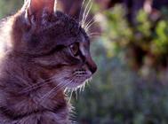 猫鼻支的治疗与防治
