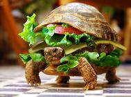 乌龟干养的方法及注意事项