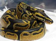 导致蛇厌食及消化不良的因素有哪些