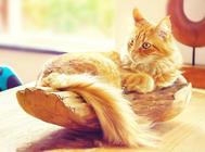 适宜猫咪的度假胜地