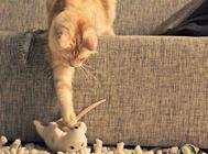 猫咪上呼吸道感染防治的几个措施