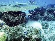 脑珊瑚的种类及饲养