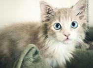 猫咪便便不正常的几大原因