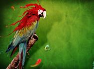 饲养鹦鹉要防范哪些问题