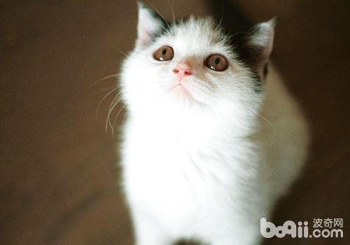 猫咪有超能力?
