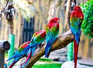 鹦鹉有哪些个性
