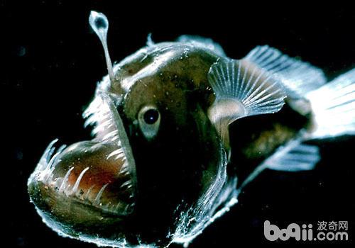 鱼的素描步骤