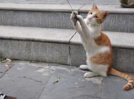 猫咪皮肤病的诊断化验技术