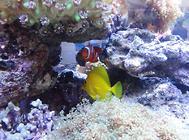 海水缸爆藻方法