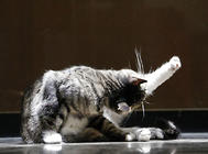 猫咪营养不良怎么办?