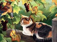 和猫咪的沟通比训练更重要
