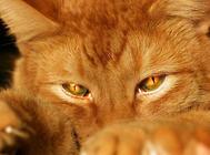 猫咪瘙痒行为的原因及诊断