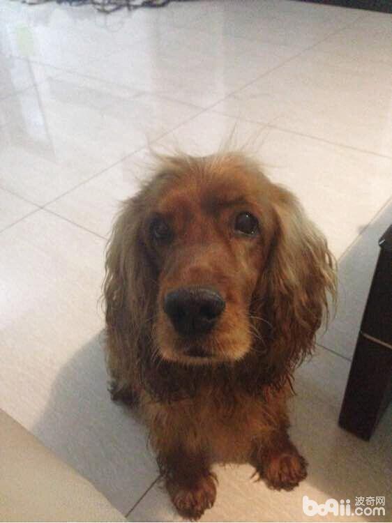 犬膈疝的诊断与治疗
