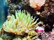 菇珊瑚饲养方法