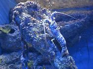 海龙科海水鱼饲养方法