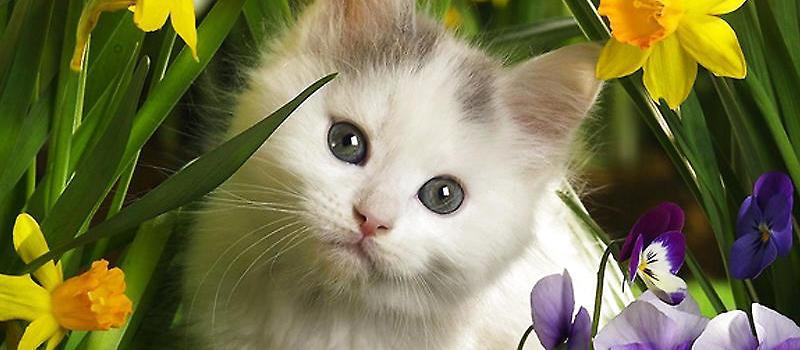 猫随意乱喝水 其实猫咪本身的饮水量并不是很多