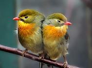 鸟的常见营养性疾病有哪些