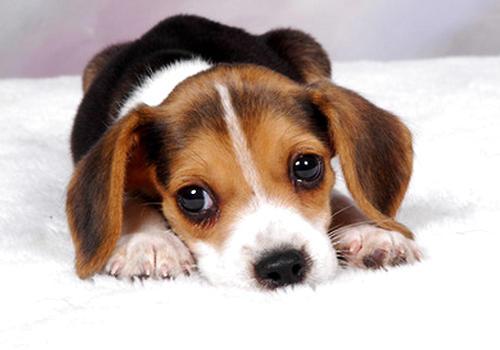 造成狗狗心理异常的因素有哪些