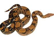 蛇毒有哪些作用