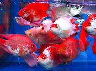 鱼缸加热棒的选择