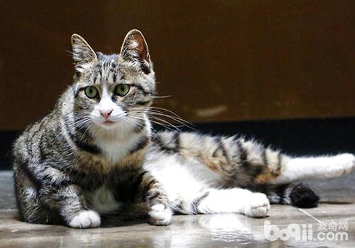 猫关节病的诊断与治疗