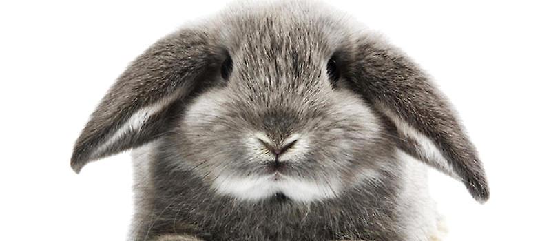 壁纸 动物 兔子 800_350