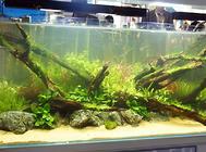 青蛙鱼饲养方法