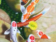 光写锦鲤饲养方法