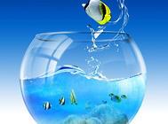鱼缸漏水怎么办?