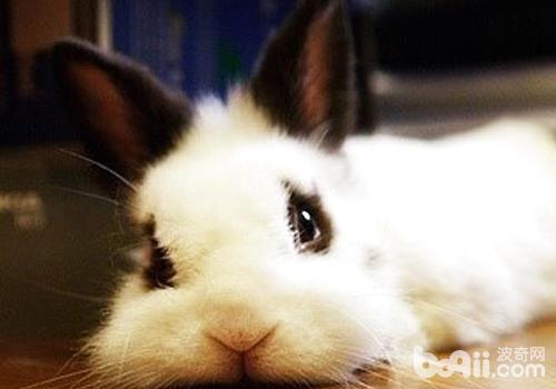 兔子相关腹泻问题处理