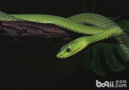 蛇鳞的颜色与其生活环境有很大的关系