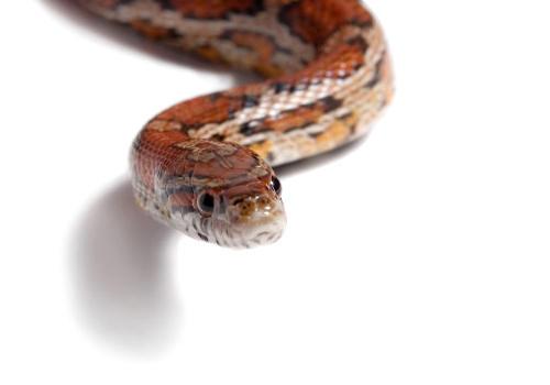 蛇的舌头没有毒