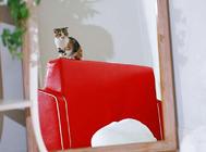 给猫咪众筹一个大房子?