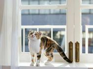 猫泌尿系统疾病的检查方法