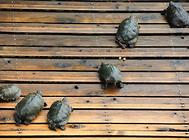 龟苗购买时要注意什么?