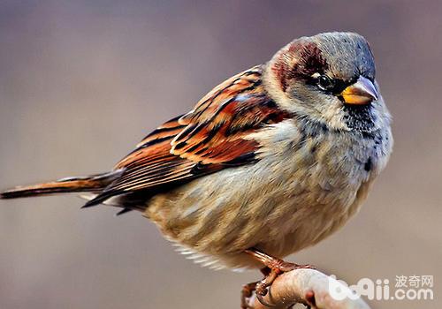 怎么饲养捡到的小鸟