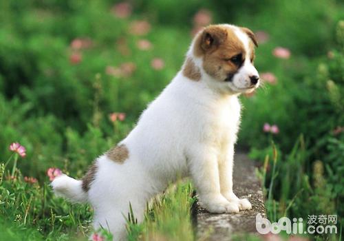 怎么帮狗狗的趾甲止血